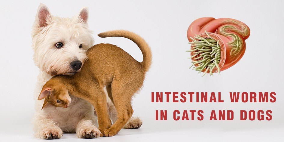 Intestinal Worms In Cats and Dogs - DiscountPetCare