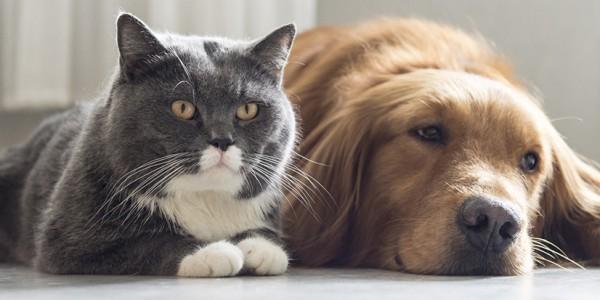 DPCau-Protect-Your-Pets1