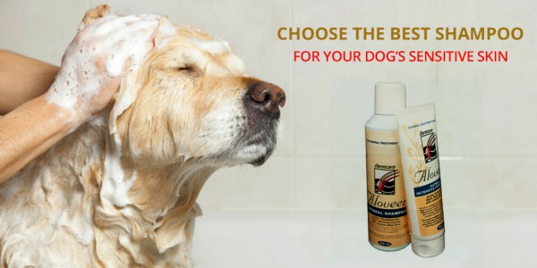Best Shampoo For Your Dog's