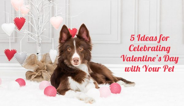 Valentine's Day With Pets