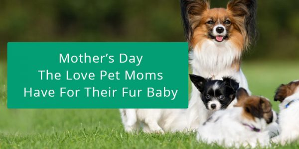 Mother's day sale on Pet Supplies