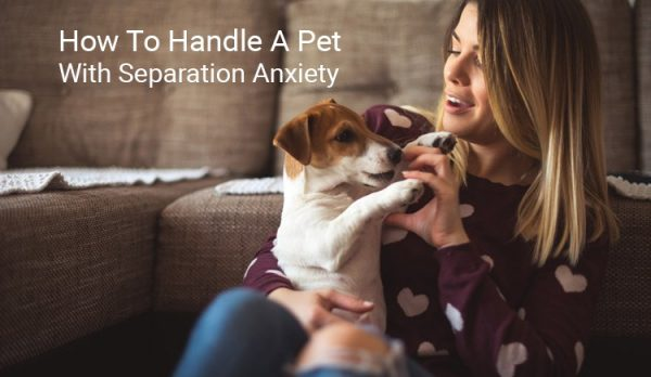 how to handle a pet