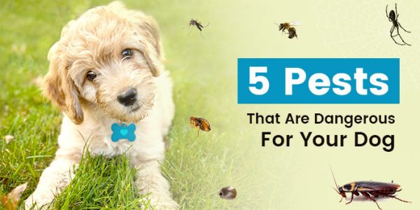 5 Deadly Pests for your Dogs