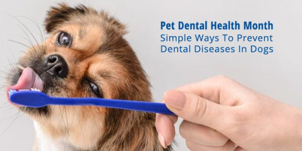Ways to treat Pets Dental Problems