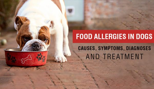 Food allergies, causes, symptoms and Treatment