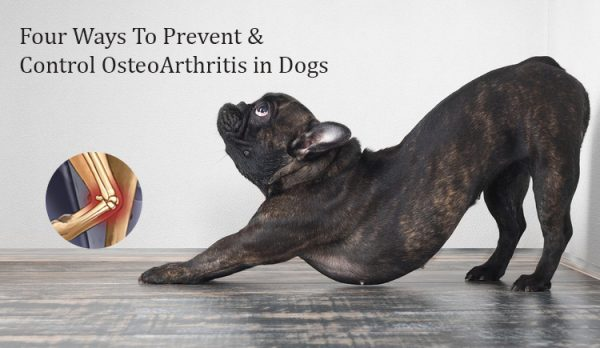 How to prevent osteoarthritis in Dogs