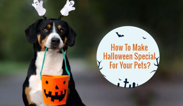 How to make halloween special for pets
