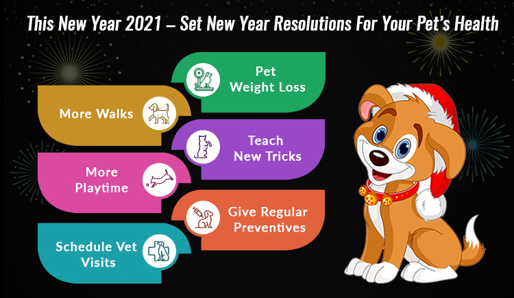 New Year Sale 2021 Pet Supplies