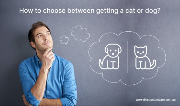 How to choose between getting a cat or dog
