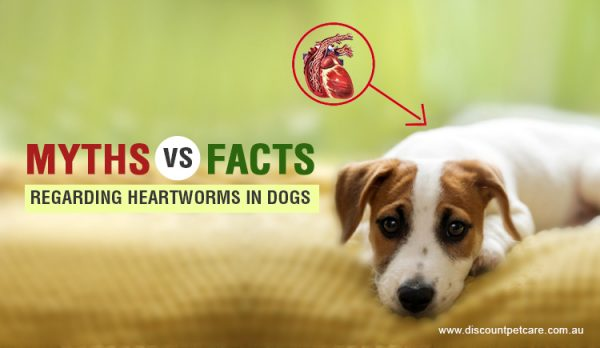 Myths vs Facts Regarding Heartworms In Dogs