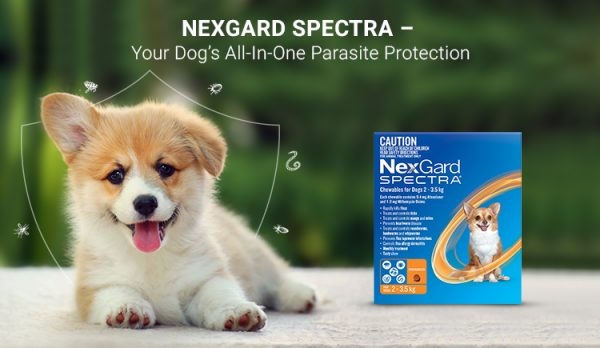 Nexgard Spectra – Your Dog's All-In-One Parasite Protection
