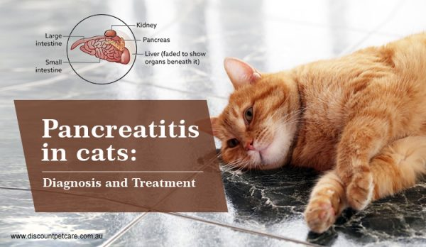 Pancreatitis in cats: diagnosis and treatment