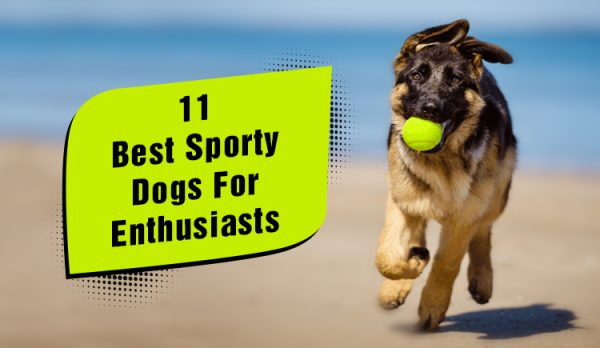 11 Best Sporty Dogs For Enthusiasts