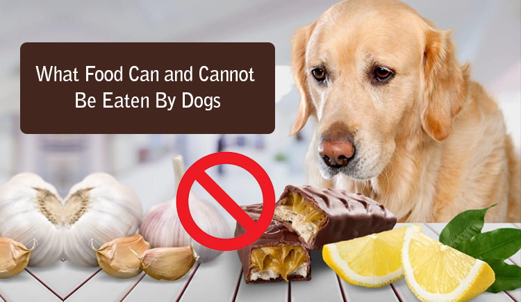What Food Can and Cannot Be Eaten by Dogs