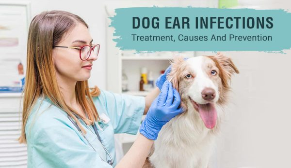 Dog Ear Infections: Treatment, Causes and Prevention