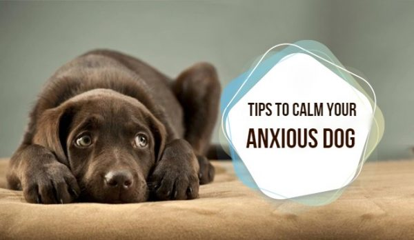 Tips to calm your anxious dog