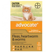 Advocate for kittens small cats